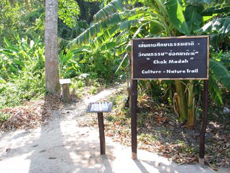 Koh Surin Chok Madah Trail