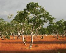 North Andaman Thailand Savannah