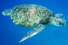 koh surin - vibrant marine life